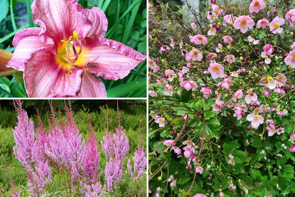 Borderplan Tess - Vaste planten borderpakket - Roze - Halfschaduw