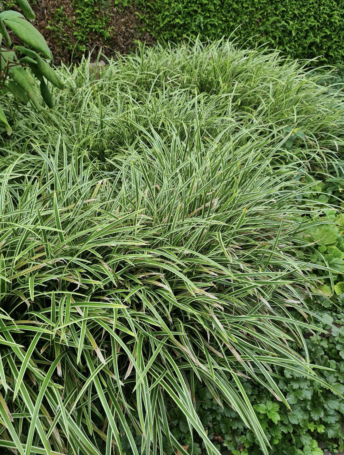 tuinplanten siergrassen borderpakketten