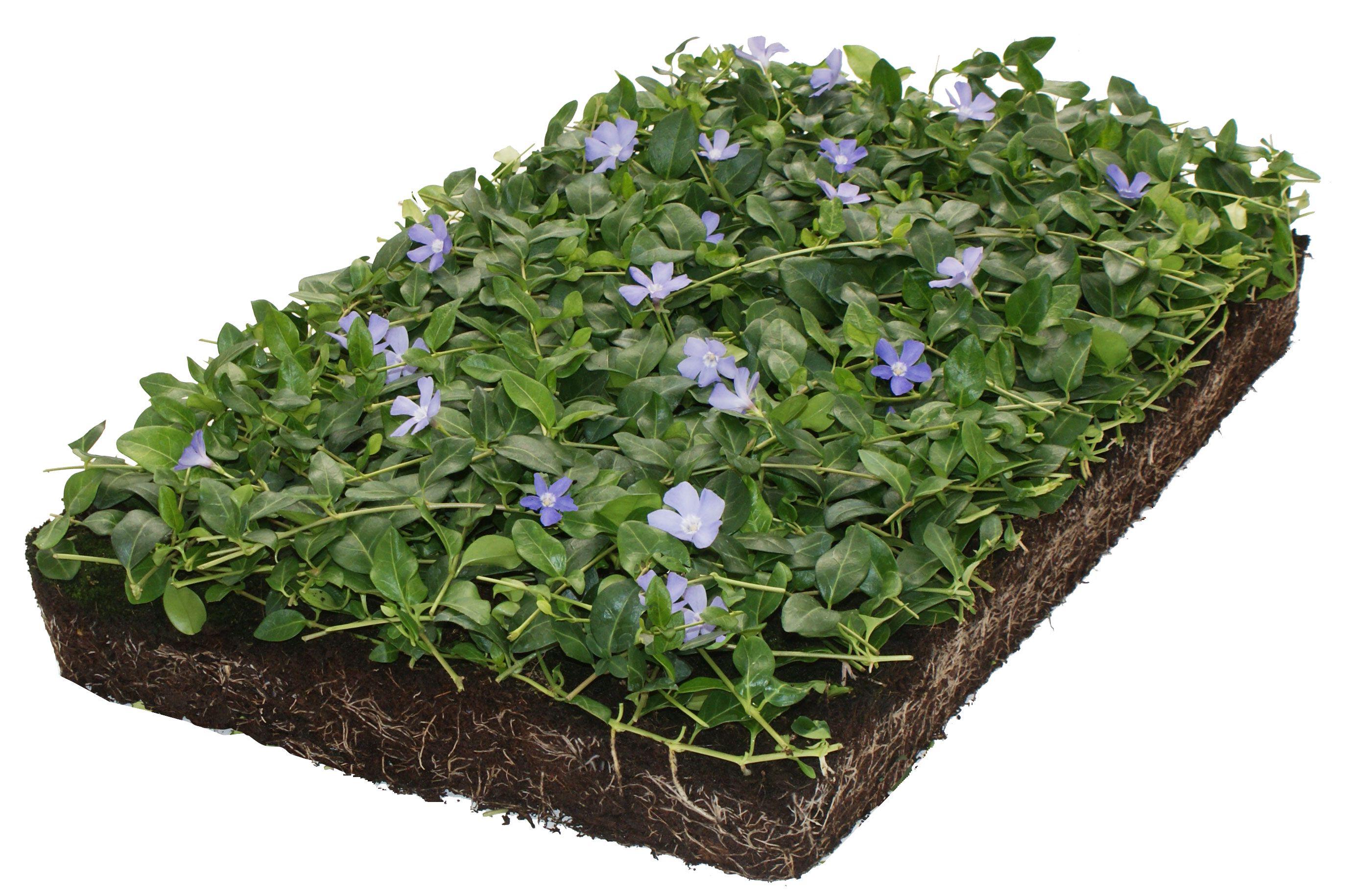 cover green minor blauw plantenmatten kant-en-klaar
