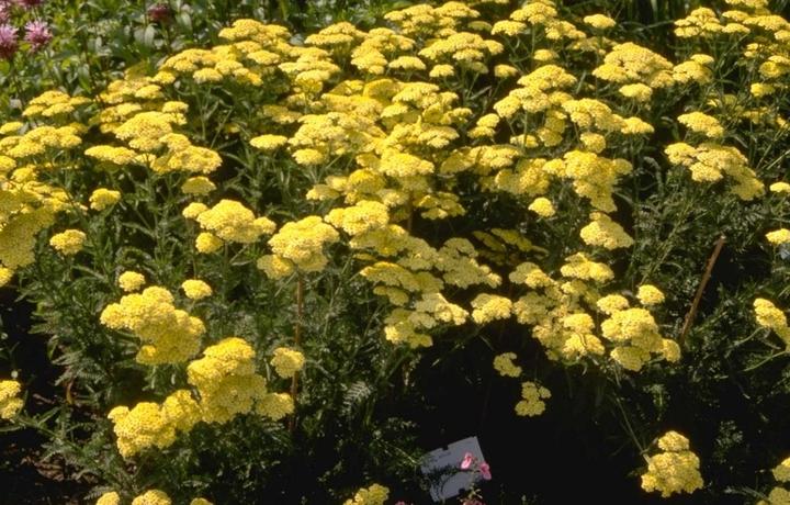 Veel planten