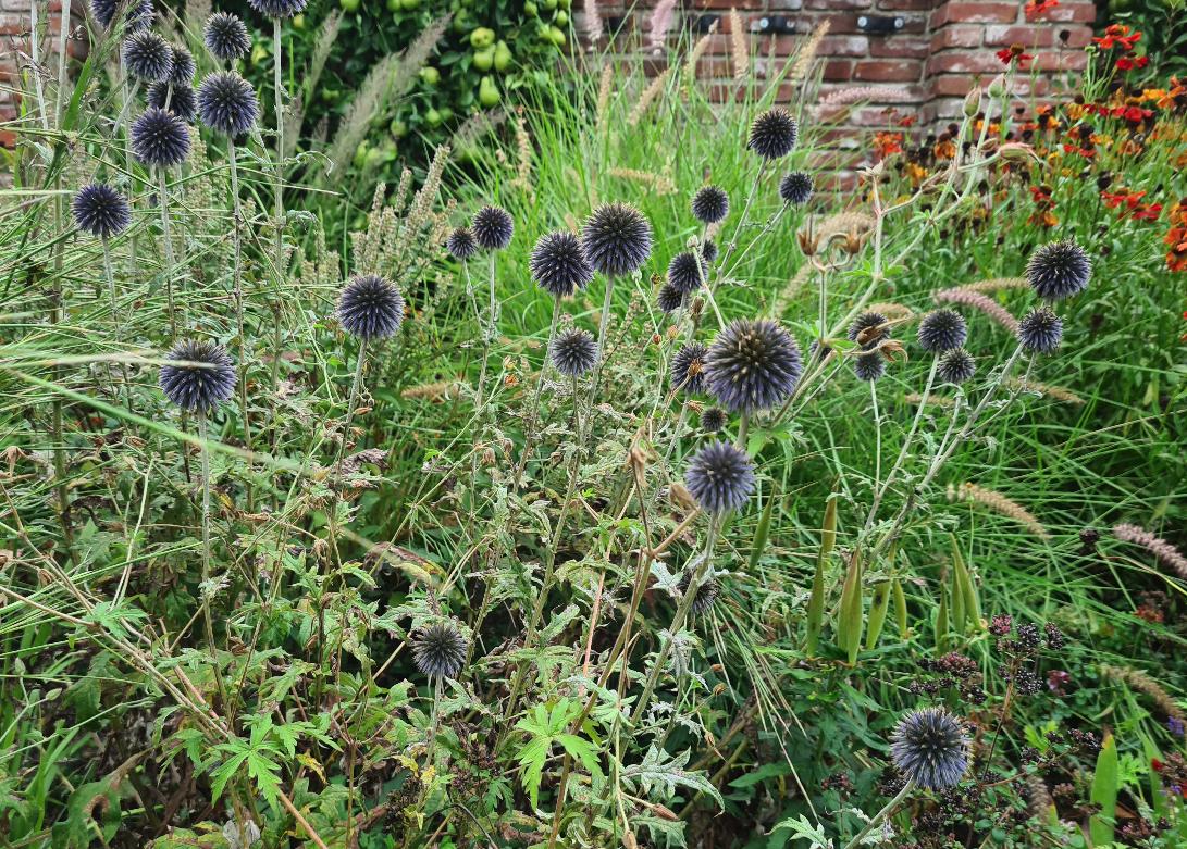Bijzondere tuinplanten blauwe bloei rond bijen vlinders