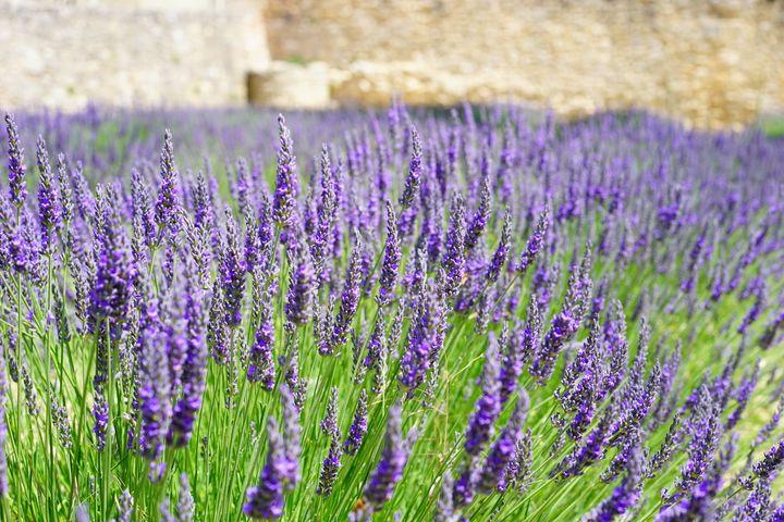 paarse tuinplanten borderpakket