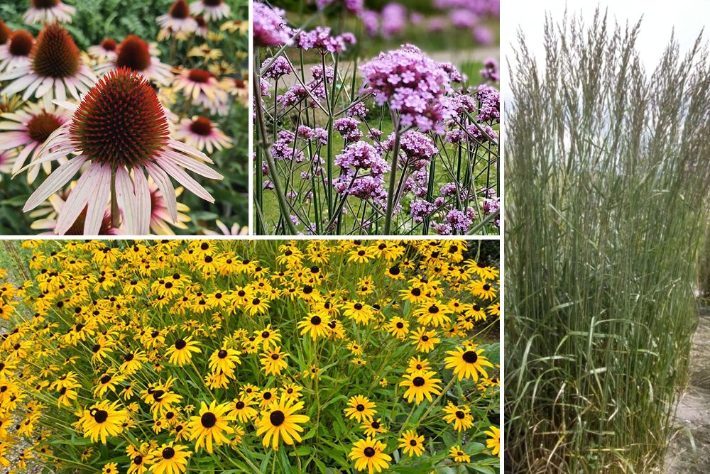 Prairieborder vaste planten paars rood geel siergras