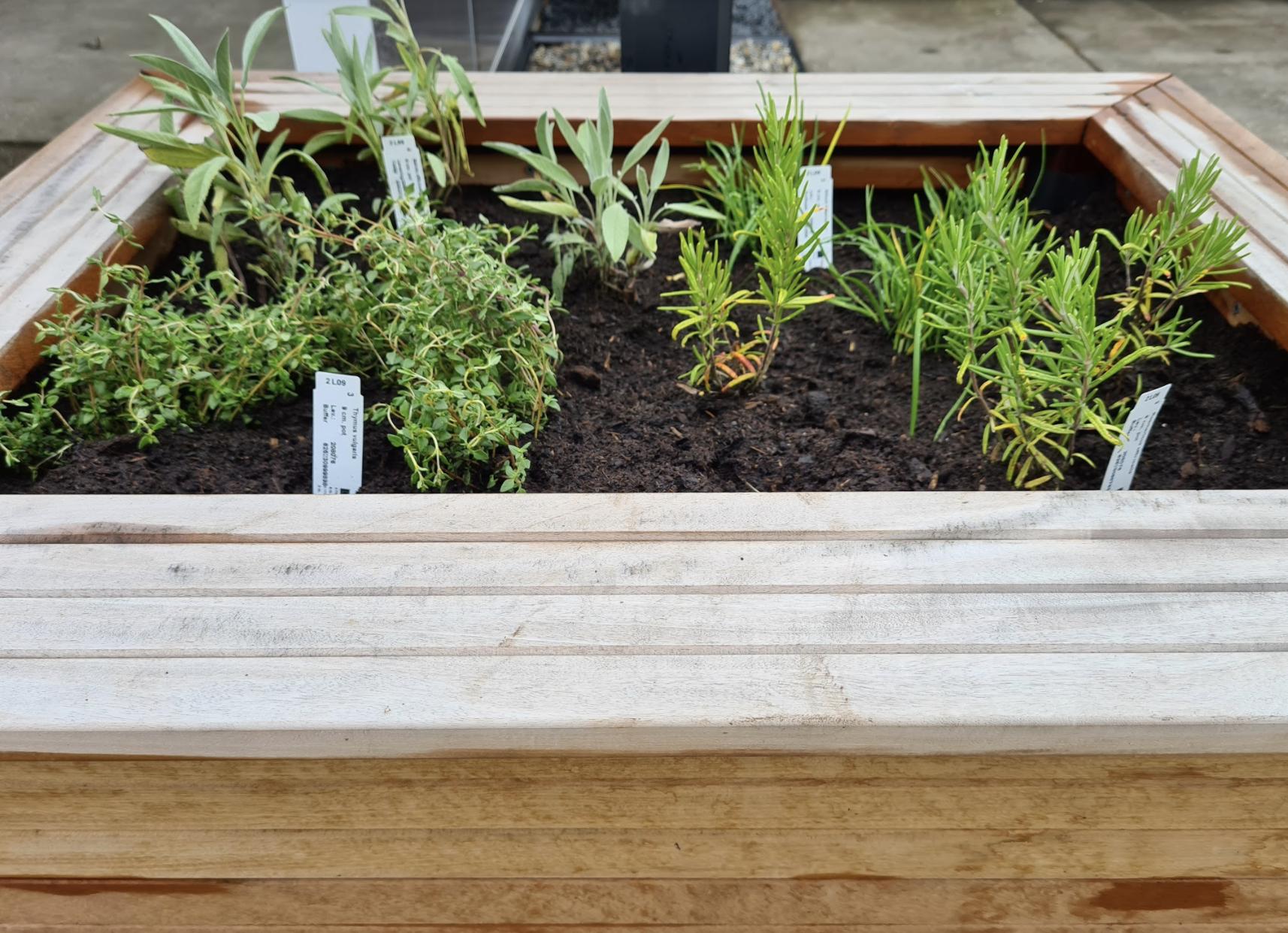 eetbaar tuinplanten borderpakket