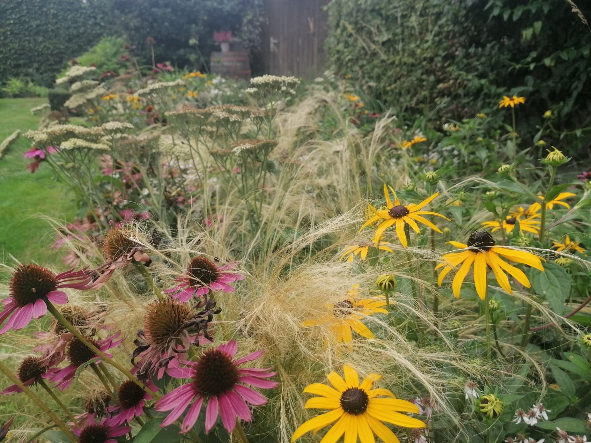 Borderpakket dries close up kant en klare tuin
