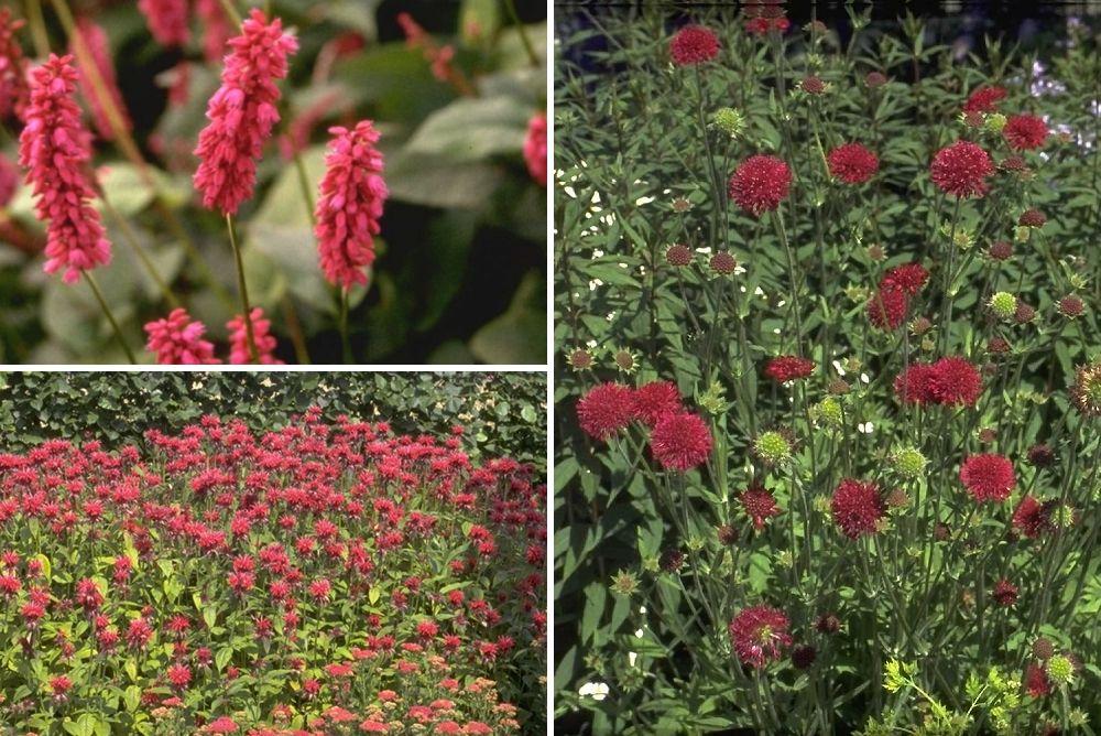 Rood bloeiende vaste planten borderpakket tuinplanten