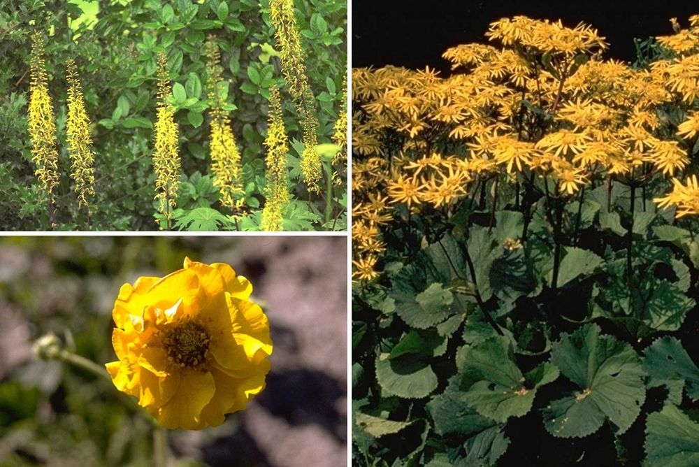 tuinplanten pakket border geel halfschaduw