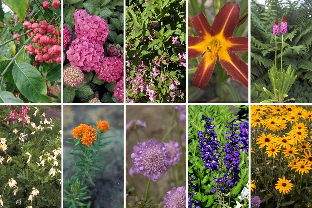 kant en klare tuin - pakket met alle planten