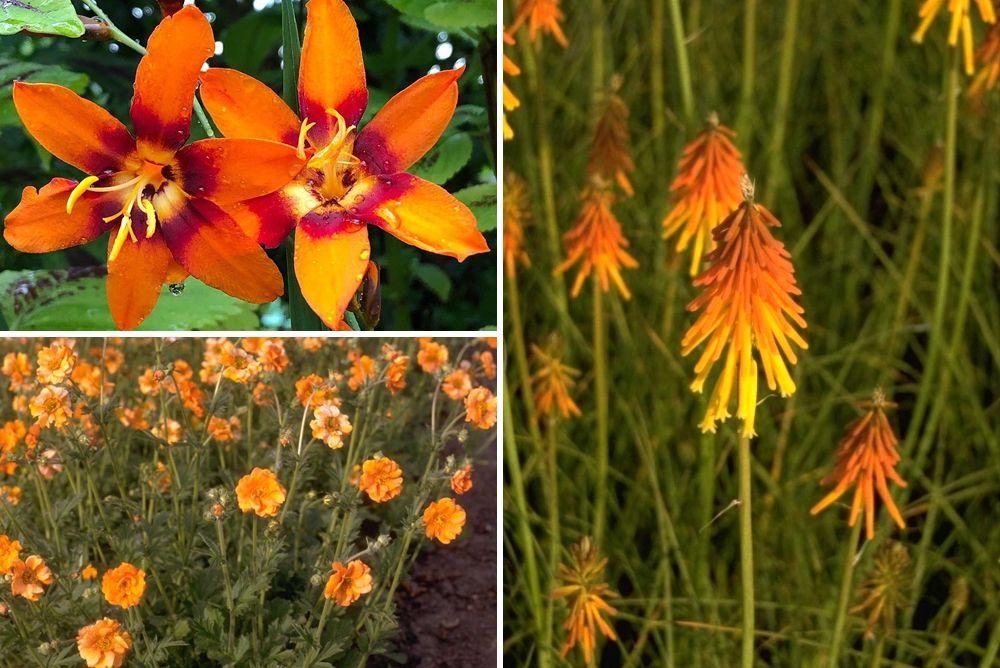 tuinplanten oranje borderpakket