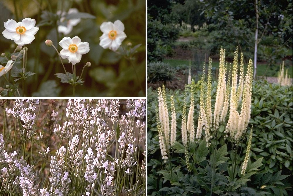 wit halfschaduwplanten
