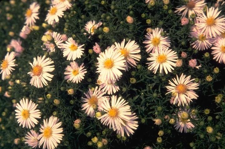 vaste planten borderpakket