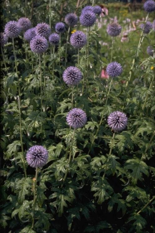 leuke blauwe bloemen tuin border