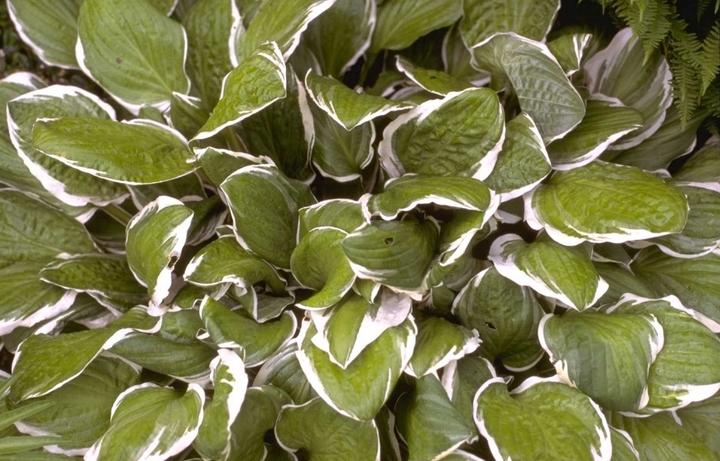 borderpakket met bijzondere bladeren