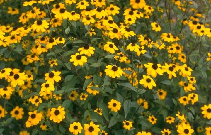 prachtige gele tuinplanten borderpakket