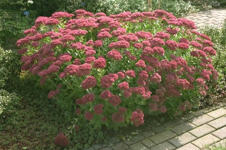 prachtig borderpakket tuinplanten