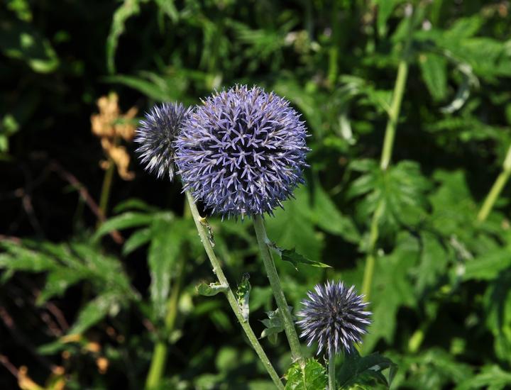 Blauwe bloemen prachtig borderpakket