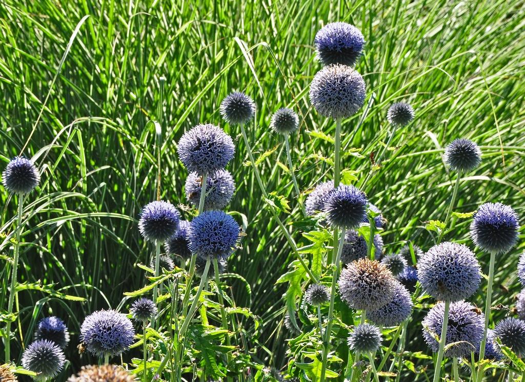 Blauwe bloemen bolvormig