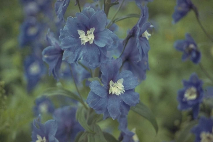 Leuke tuinplanten blauwe kleur inspiratie tuin