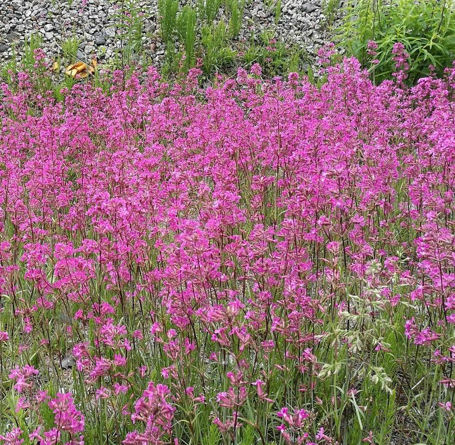 schitterende roze bloemen