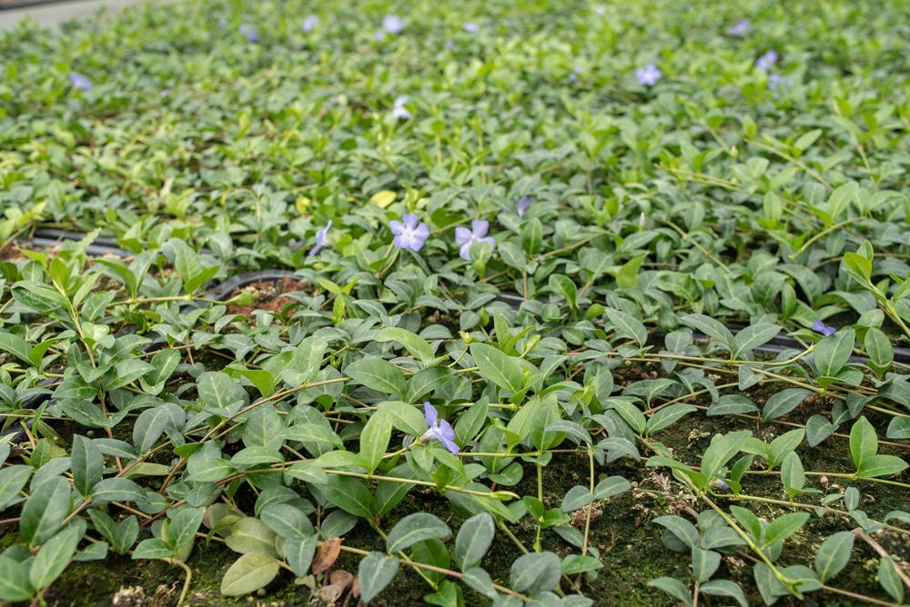 Plantenmatten