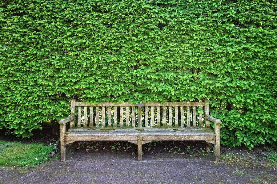 Groene heg tuin
