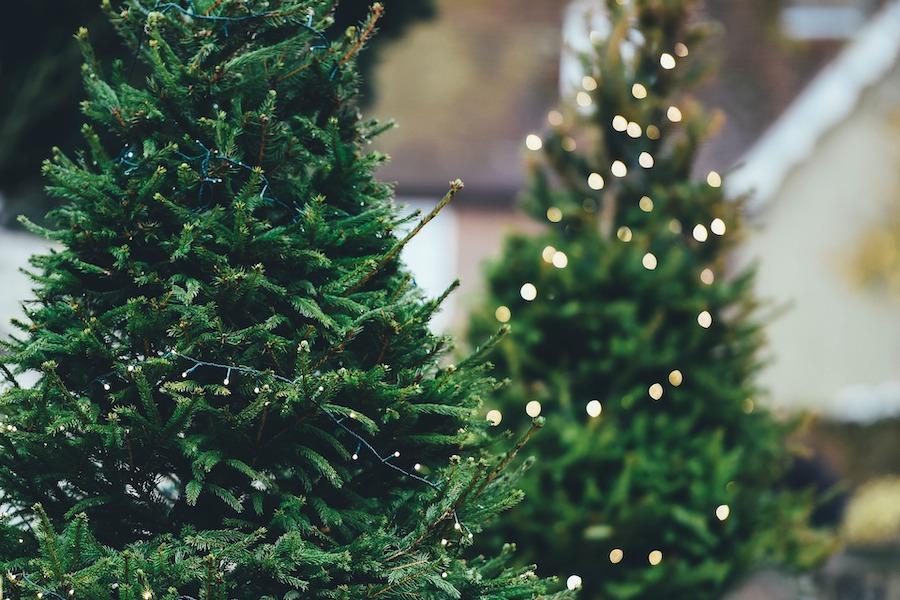 Meerdere kerstbomen
