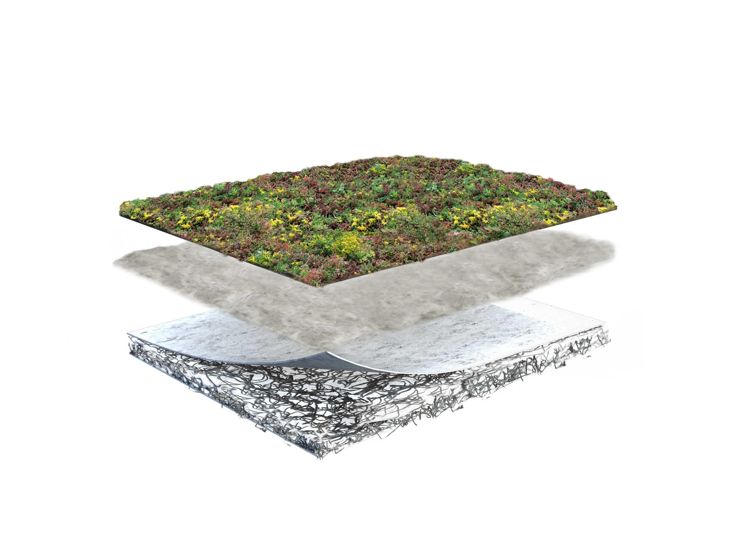 sedumdak sempergreen lichtgewicht dak