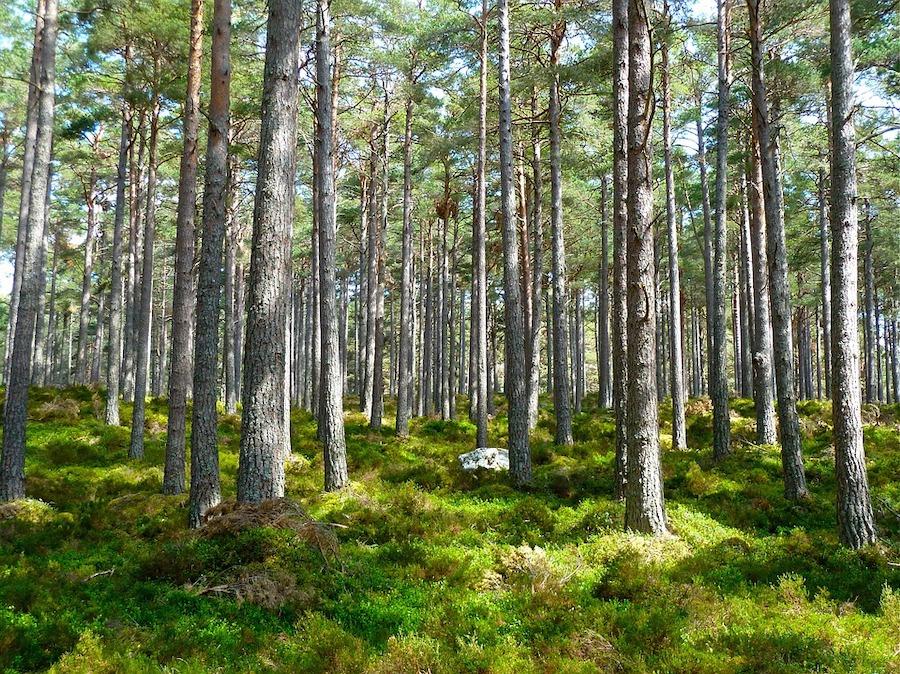 Duurzaam bosbeheer