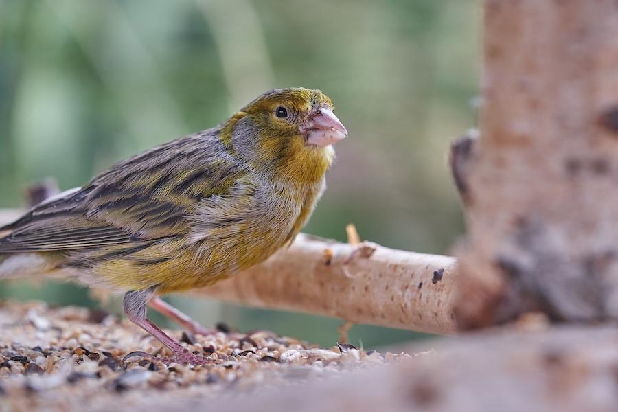Vogel op vogelplatform
