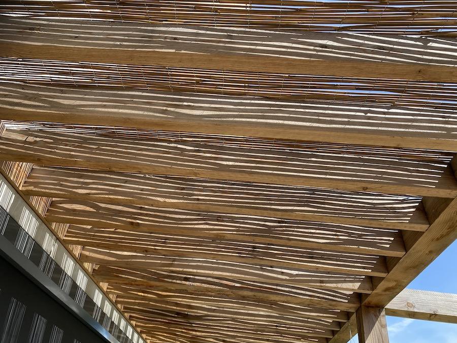 Bamboe voor groen dak