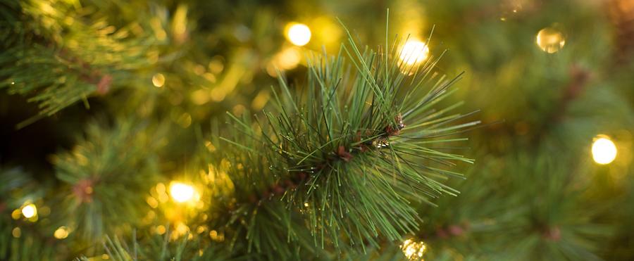 Kerstboom eindhoven
