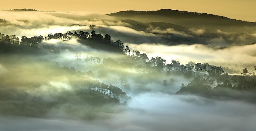 FSC bos tropisch regenwoud