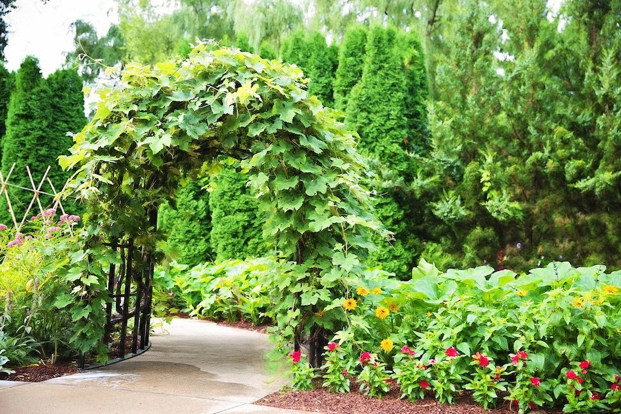 Pergola begroeid met klimplanten