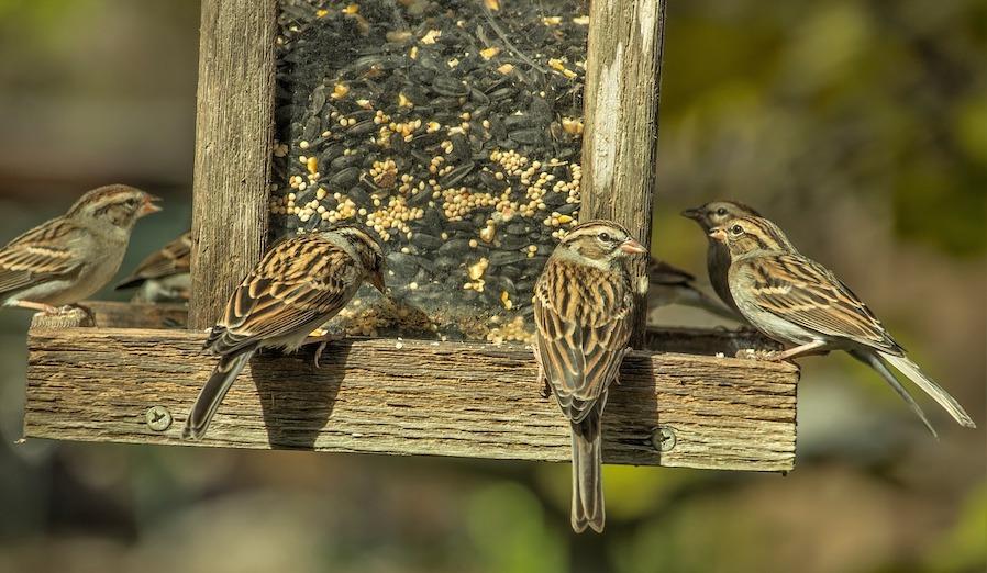 Mussen met vogel voederplatform