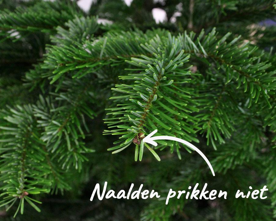 Details Nordmann kerstboom