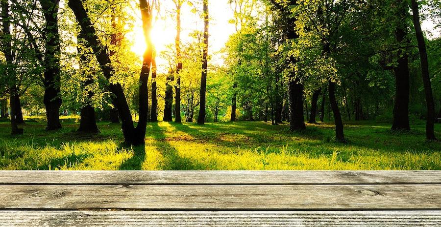 Vlonder groen bos