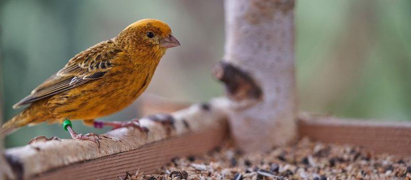 voederplatform vogel