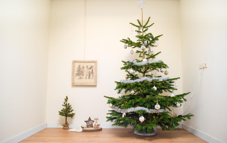 Kerstboom 2 Meter Nordmann Kopen Online 200 Cm
