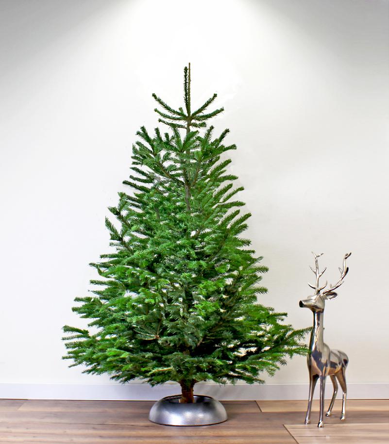 Echte Kerstboom Kopen Grote Nordmann Bezorgen 2 5 3 4 Meter