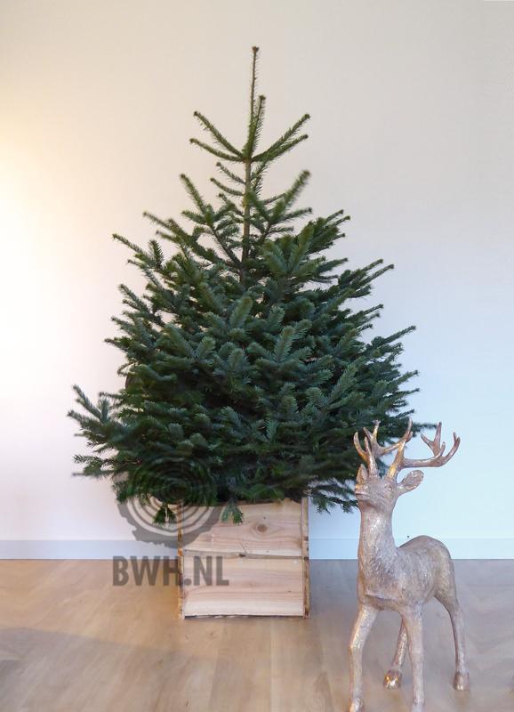 Welke Kerstboom Moet Je Kiezen Kerstboom Online Kopen