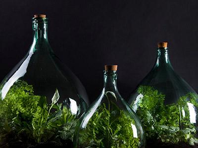 Plant Terraria
