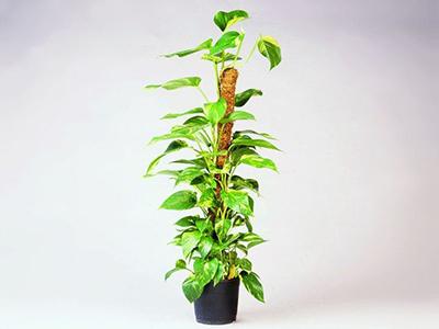 Plantenstokken
