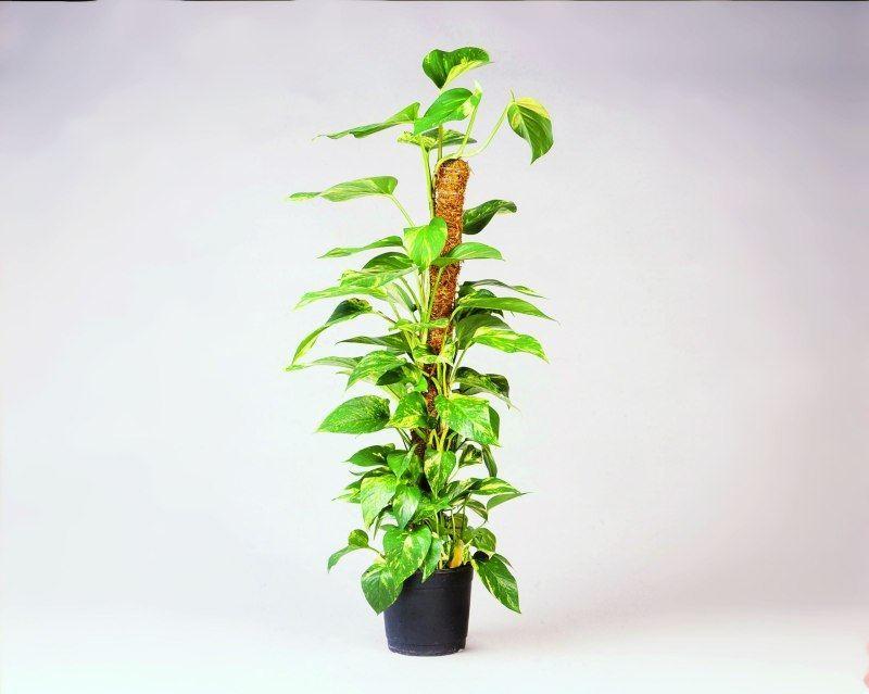 nature-kokosplantstok-120cm