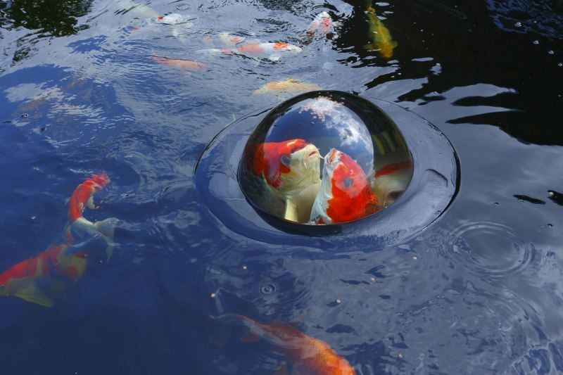 Velda Vijver Floating Fish Dome