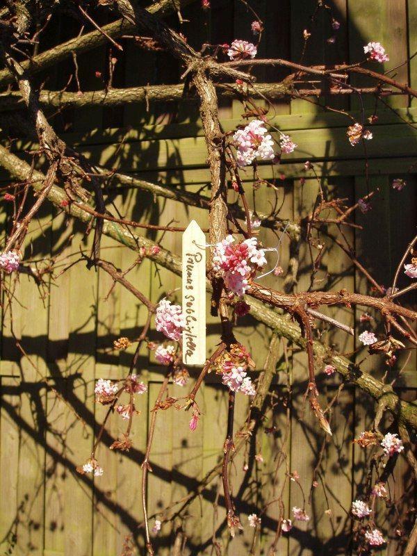 nature-houten-plantenetiketten-gekleurd