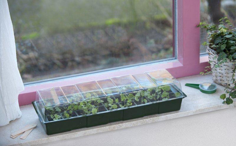 nature-vensterbank-kweekkas