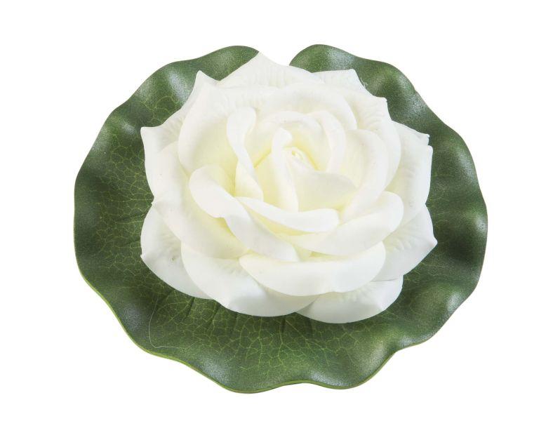 wit lotus velda