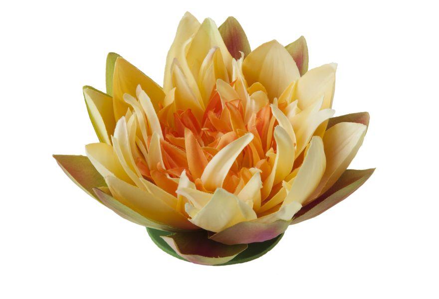 velda_drijvende_lotus_geel_groot.jpg