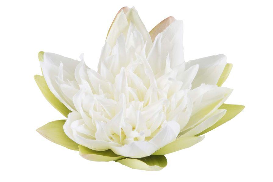 velda_drijvende_lotus_wit_groot.jpg