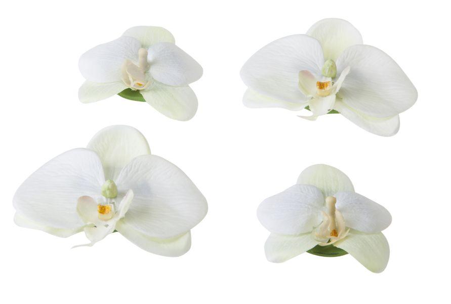 velda_orchidee_wit.jpg